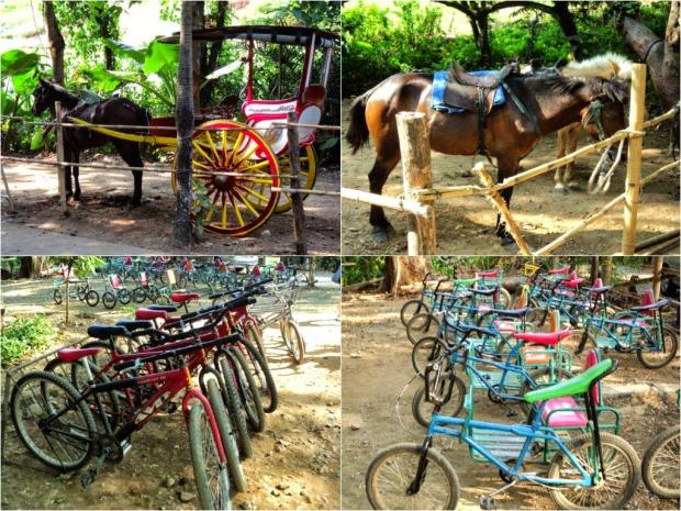 Horses & Bikes