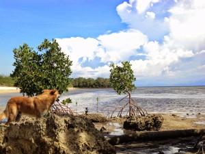Burot Island Beach